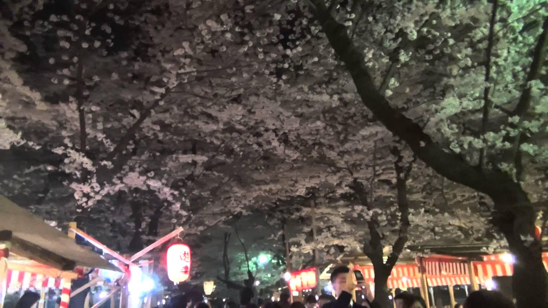 空を覆いつくすほどの夜桜アーチのキレイさに感動!京都が誇る、癒し桜の名所「平野神社」
