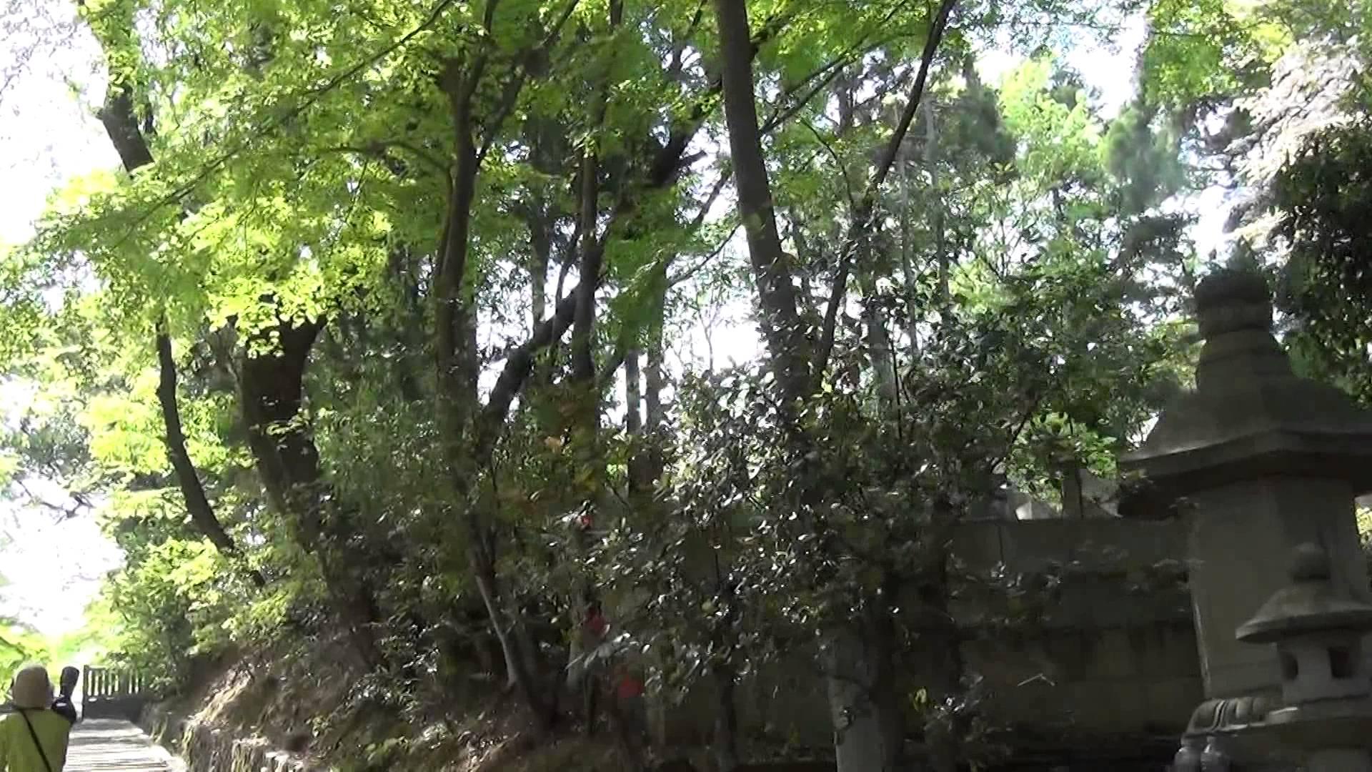 総本山 光明寺にて、みずみずしい緑のもみじを見てリフレッシュ