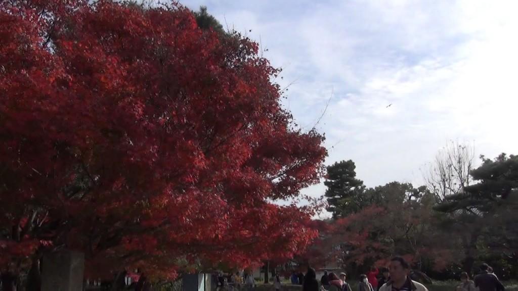 平等院の紅葉と平成の大修理が終わったばかりの朱色の鳳凰堂が美しく交わってた